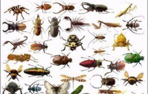 شركة ابادة الحشرات بالدمام