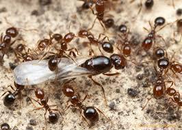 شركات مكافحة النمل الابيض بالاحساء