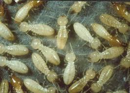 شركة مكافحة النمل الابيض بالخبر
